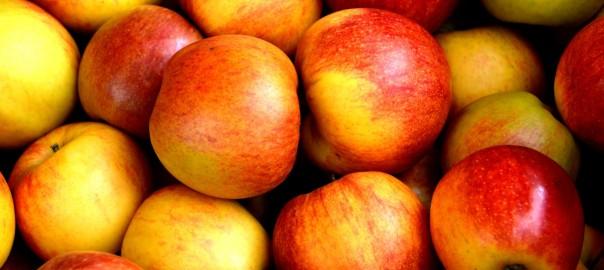 frutas de primavera para comedores escolares